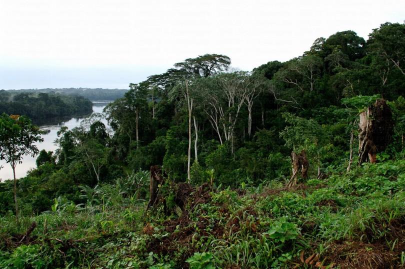 Gabon apr s le conseil des ministres grand m nage aux for Eaux et forets